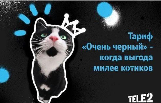 выгода милее котиков